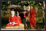 In the Garden of the Red Buddhas. Boodhi Tathaung.