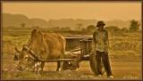 Country Life. Ninh Binh Province.