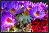Flowers from Burma.