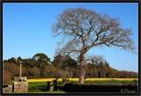 Old Oak, Old Cross...