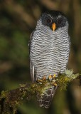 Trogon Tours: Mindo and Guango