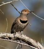 AZ. Birds & Critter's 2014