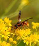 insects 115.jpg