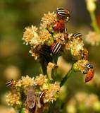 Bug's & Beetles Galore