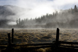 wawona early fog 1
