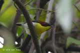 Sunbird, Handsome @ PICOP
