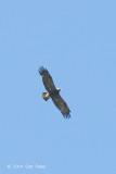 Eagle, Imperial (sub ad) @ Neusiedl, Hungary