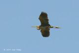 Heron, Purple @ Neusiedl, Hungary