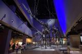 Three Sauropods