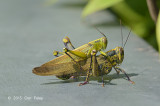 Grasshoppers @ The Pinnacle