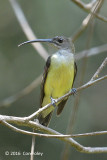 Spiderhunter, Little