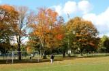 fall1414.jpg