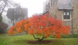 Late fall at the College of New Rochelle