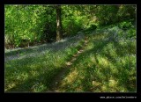 Stagshaw Garden #02, Ambleside