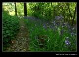 Stagshaw Garden #03, Ambleside