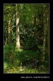 Stagshaw Garden #09, Ambleside