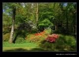 Stagshaw Garden #10, Ambleside