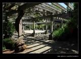 Washington Park Arboretum #01, Seattle, WA