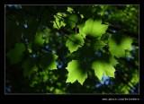 Washington Park Arboretum #03, Seattle, WA