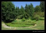 Washington Park Arboretum #04, Seattle, WA