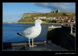 Whitby #45, Summer 2016, North Yorkshire