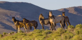 Wild Horses at Magic Hour