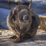 Beaver Antics