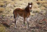 Sweet Heart Foal