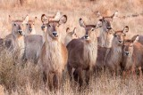 Wildlife,  Kruger- National -Park