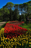 Arboretum, Tampere