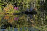 Reflection, Lake Pyhäjärvi