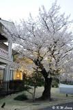 Kyusakuranomiya Kokaido DSC_2680