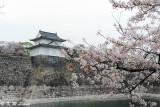 Sakura DSC_2594