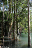 Shing Mun Reservoir DSC_1410