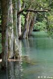 Shing Mun Reservoir DSC_1411
