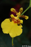 Orchid DSC_2204