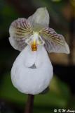 Orchid DSC_2117