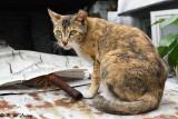 Cat DSC_2855