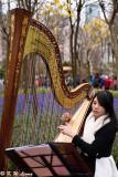 Harp Solo by Arielle Wong DSC_4069