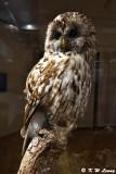 Owl DSC_4412