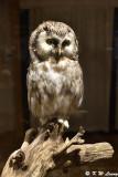 Owl DSC_4413