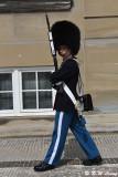 Amalienborg Palace Guard DSC_5646
