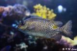 Fish DSC_1358