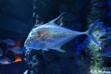 Fish DSC_1388