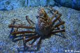 Crab DSC_1451
