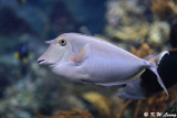 Fish DSC_1288