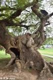 Tree DSC_0659