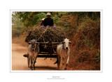 Myanmar 253