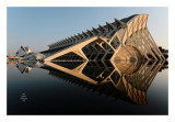 Valencia - Ciudad de las artes y las ciencias 16
