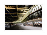 Les Halles new canopy 6